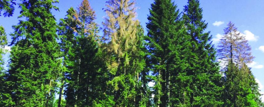 Forêt en sursis