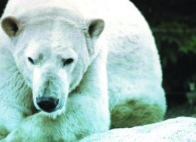 Moselle : Le Zoo d'Amnéville repris