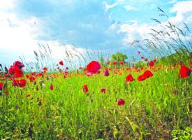 Le Luxembourg signe la fin du glyphosate