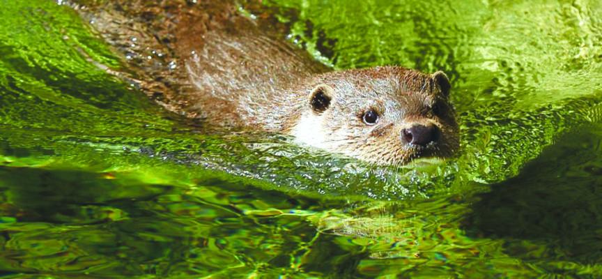 Wallonie : La faune sauvage s'enrichit