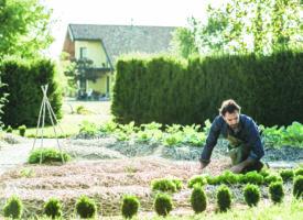 La Wallonie se met au vert