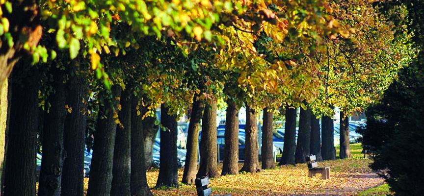 Liège plante des arbres